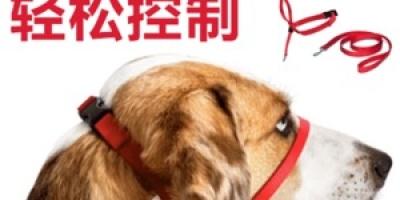 宠物牵引绳十大品牌排行榜,宠物牵引绳哪个品牌比较好?